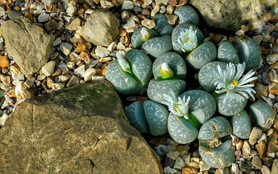 How To Build A Rockery Guide