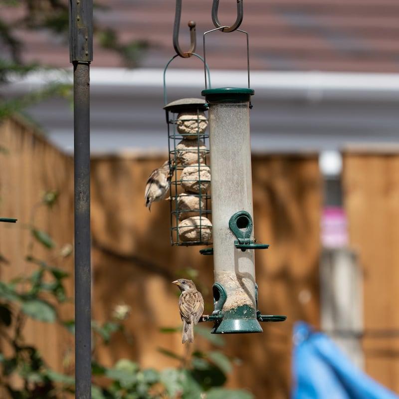 Bird Feeder 1 by Gareth Kelley | Welsh Slate Water Features