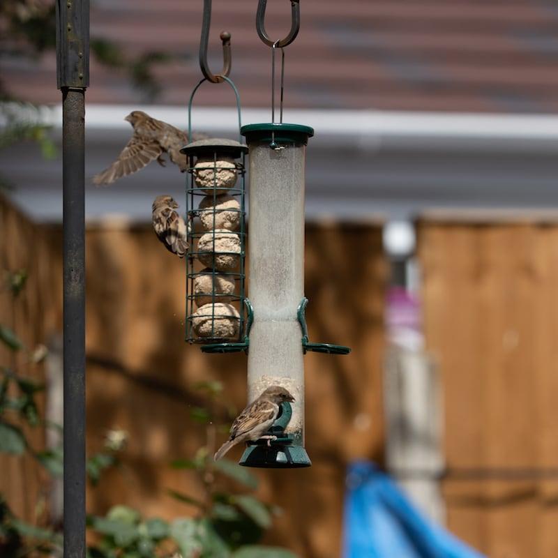 Bird Feeder 2 by Gareth Kelley | Welsh Slate Water Features
