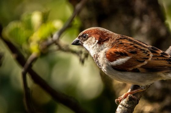 Top 5 Birds To Spot In Your Garden