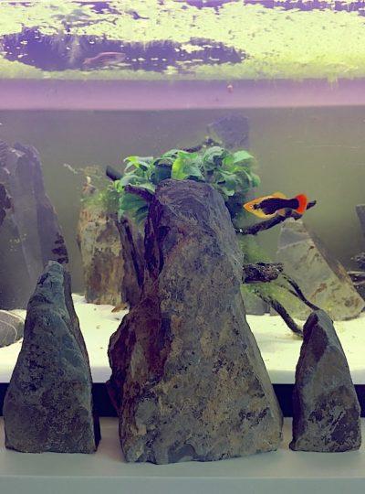 Aquarium Monolith