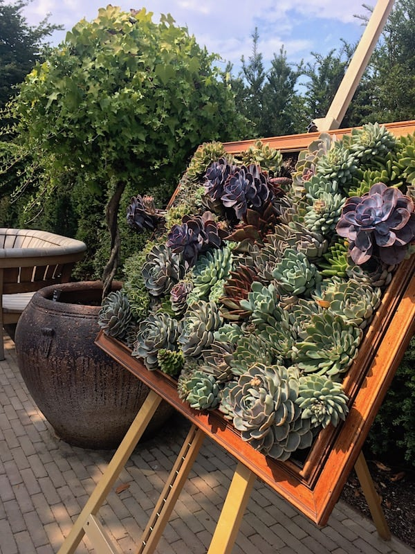 Succulent Art at RHS Wisley   Welsh Slate Water Features