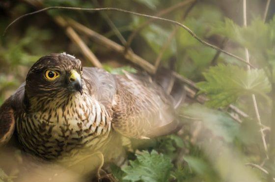 Top 5 Rare Garden Birds